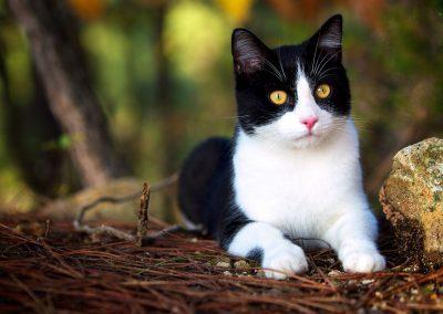 Un chat en pleine santé grâce a une alimentation saine